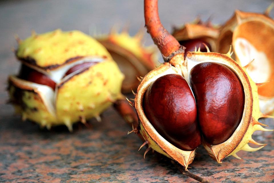 Vitamínová bomba ukrytá v gaštanoch