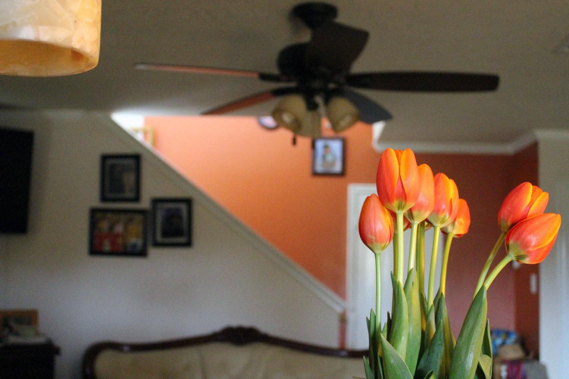 Jednoduché spôsoby, ako si vytvoriť zdravý interiér