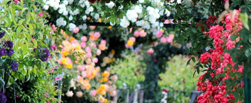 Nezabudnite na jarný strih. V záhrade.