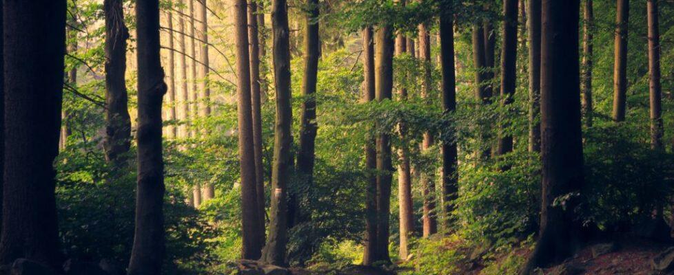 Zoznam potrebného vybavenia na výlet do prírody